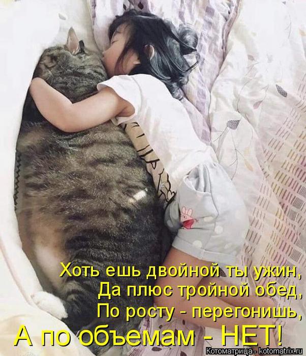 kotomatritsa_2 (1) (602x700, 422Kb)