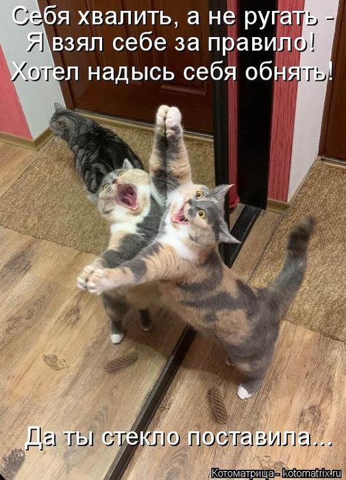 kotomatritsa_FH (505x700, 365Kb)