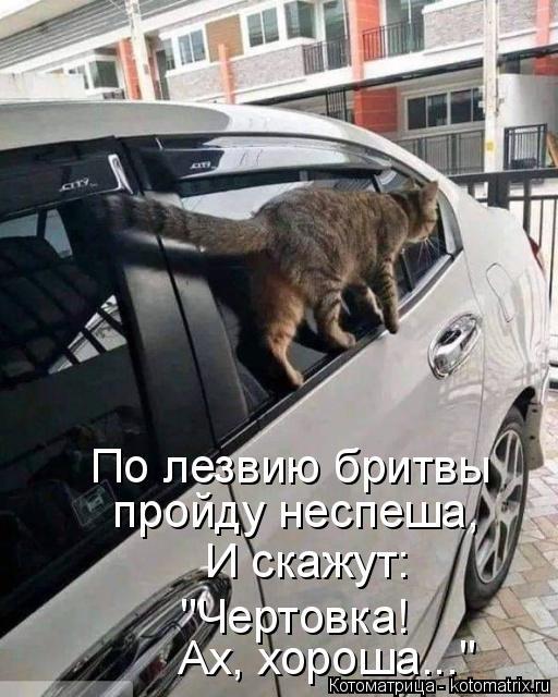 kotomatritsa_V (512x640, 213Kb)