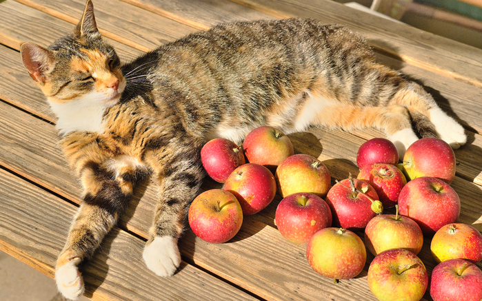 Cats_Apples_Wood_planks_553884_3840x2400 (700x437, 525Kb)