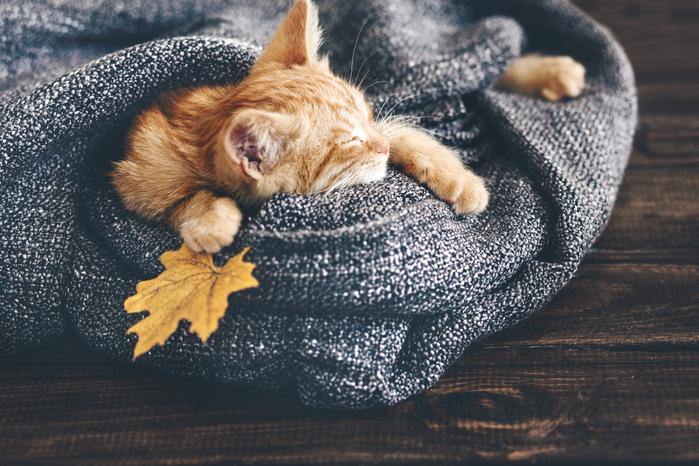 Cats_Kittens_Ginger_460155 (700x466, 440Kb)