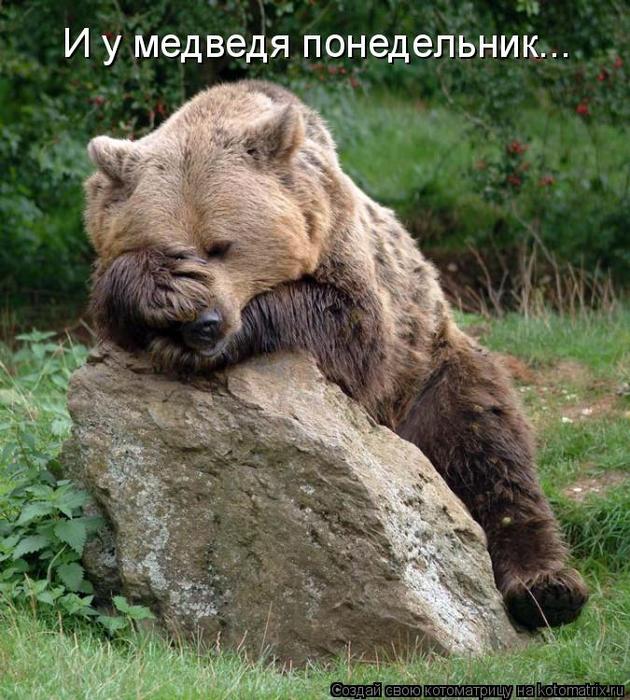 kotomatritsa_x (630x700, 488Kb)