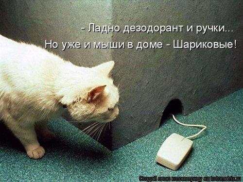 1568395272_kotomatricy-31 (500x375, 140Kb)