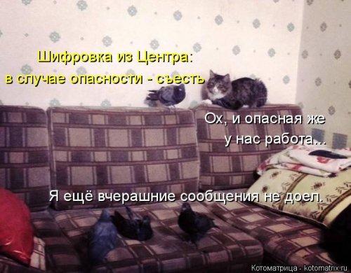 1568395313_kotomatricy-29 (500x390, 139Kb)