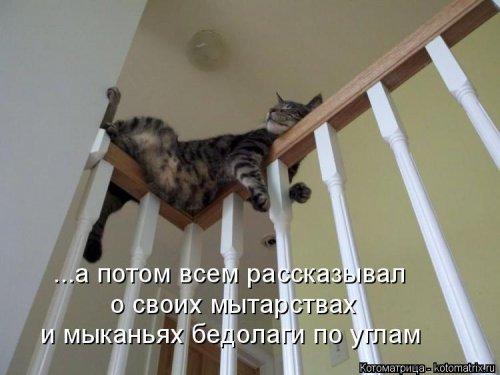 1568395270_kotomatricy-14 (500x375, 107Kb)