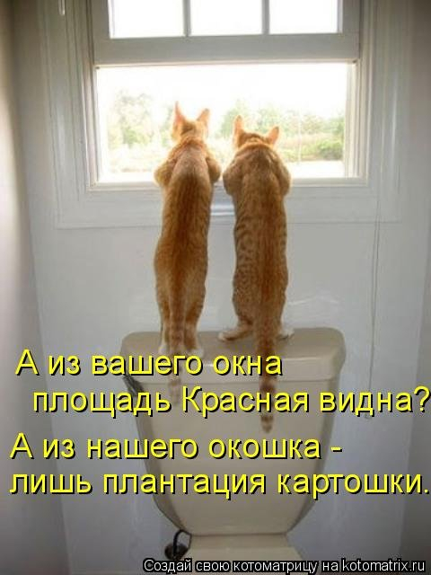 1568395308_kotomatricy-13 (480x640, 182Kb)