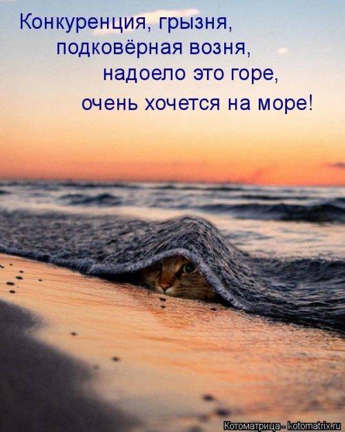 1568395251_kotomatricy-28 (500x625, 210Kb)