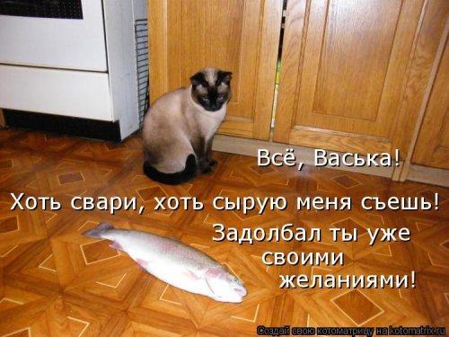 1568395297_kotomatricy-48 (500x375, 171Kb)