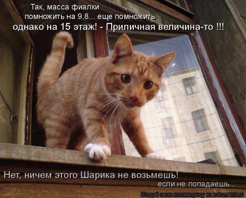 1568395276_kotomatricy-21 (500x403, 160Kb)