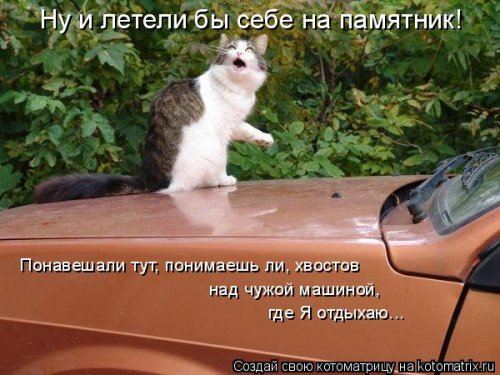 1568395257_kotomatricy-18 (500x375, 167Kb)