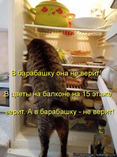 1568395297_kotomatricy-45 (500x668, 244Kb)