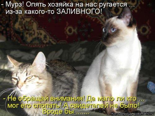 1568395302_kotomatricy-39 (500x375, 150Kb)