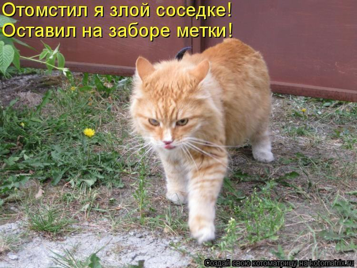 dlyakota.ru_kotiotkotomatrici_1326235441931 (700x524, 429Kb)