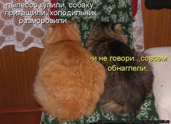 1507231_cats (700x511, 263Kb)