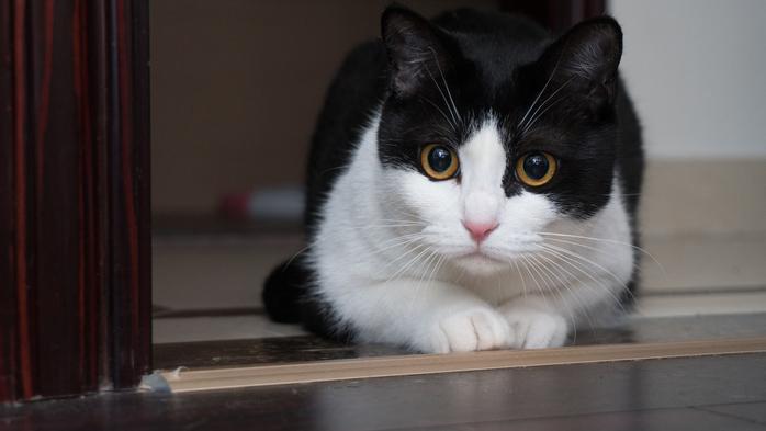 Cute-cat-white-black_3840x2160 (700x393, 210Kb)
