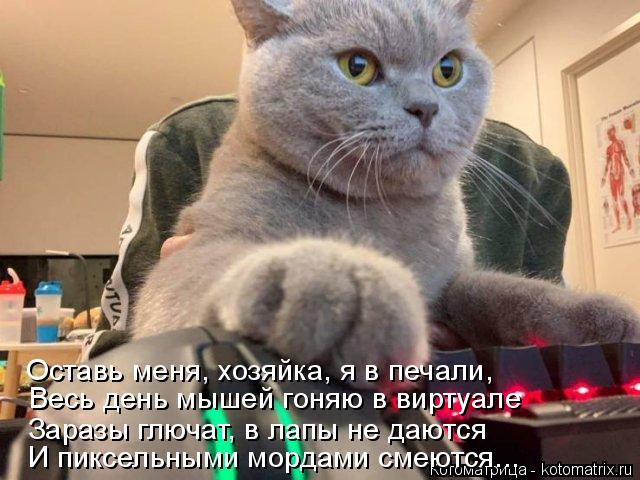 kotomatritsa_c (640x480, 229Kb)
