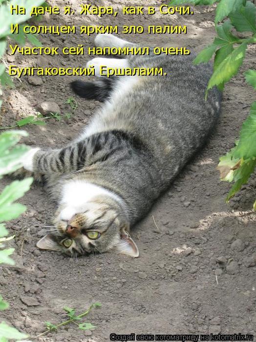 kotomatritsa_H9 (524x700, 421Kb)