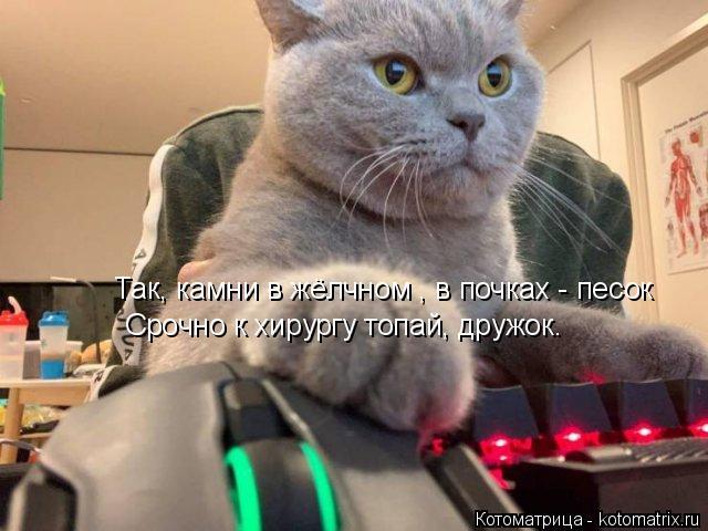 kotomatritsa_k (640x480, 202Kb)