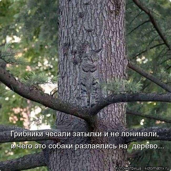 kotomatritsa_p (650x650, 295Kb)