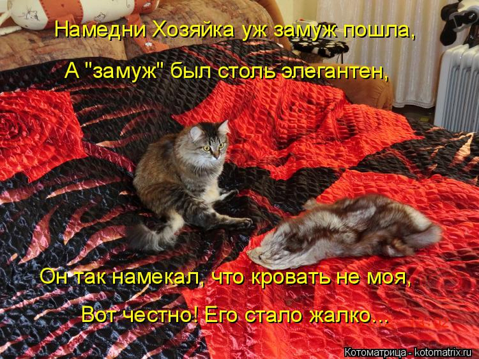 kotomatritsa_Q (700x524, 551Kb)