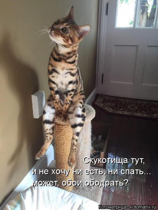 kotomatritsa_x (524x700, 271Kb)