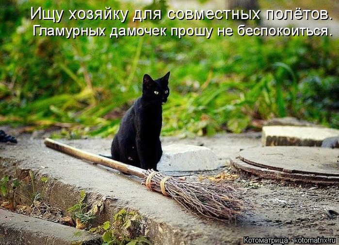 kotomatritsa_4 (700x504, 457Kb)