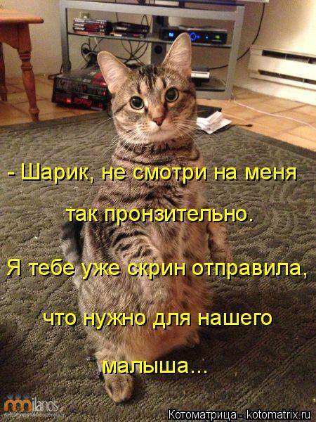 kotomatritsa_Qe (450x600, 284Kb)