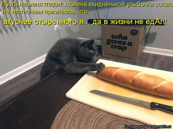 kotomatritsa_rU (700x524, 352Kb)