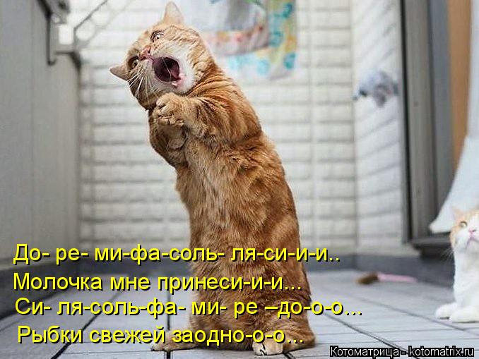 kotomatritsa_Ch (678x509, 261Kb)