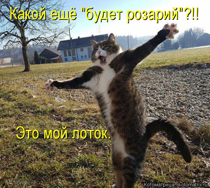 kotomatritsa_p (669x599, 403Kb)