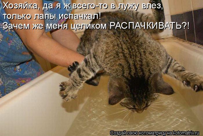 kotomatritsa_x (700x469, 246Kb)