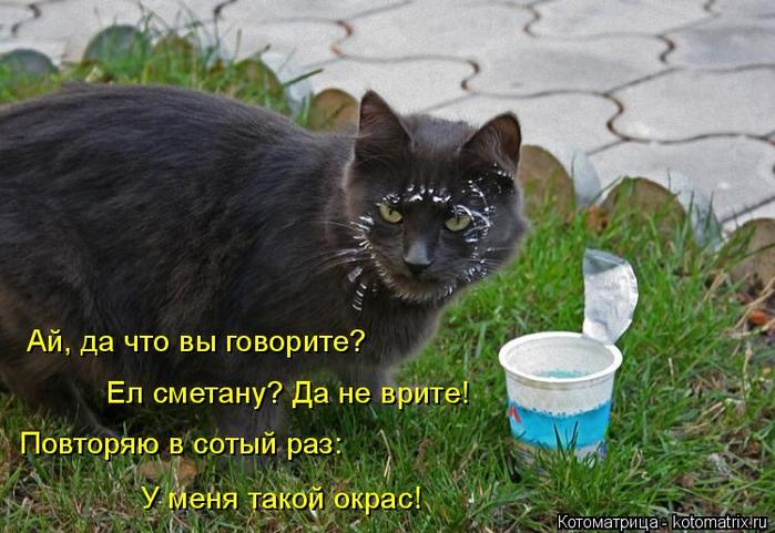 kotomatritsa_B (700x481, 365Kb)