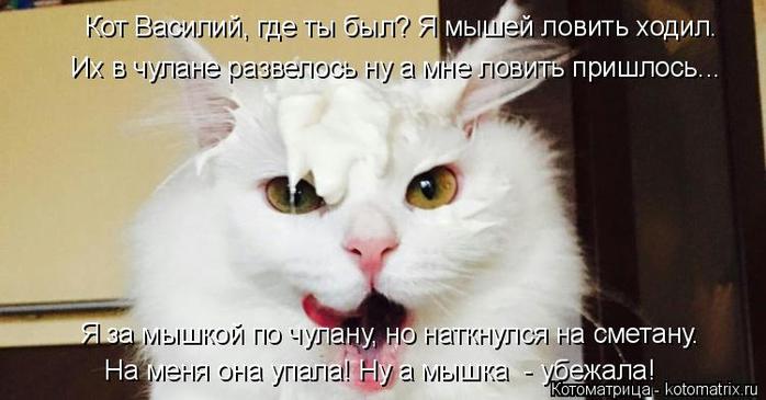 kotomatritsa_i (700x365, 212Kb)