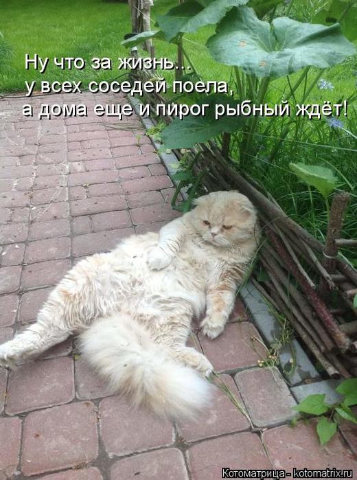 kotomatritsa_Q (520x700, 381Kb)