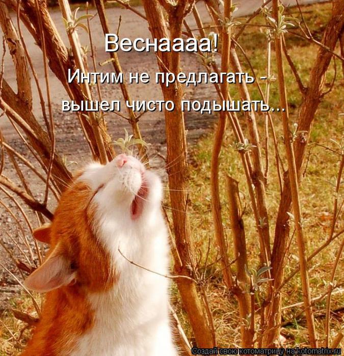 kotomatritsa_SY (675x700, 624Kb)