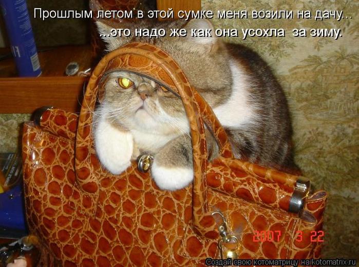 kotomatritsa_6J (700x519, 452Kb)