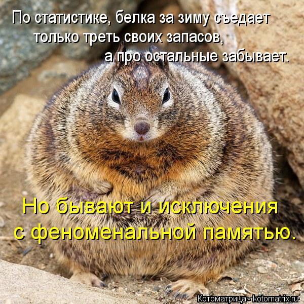 kotomatritsa_jq (600x600, 365Kb)