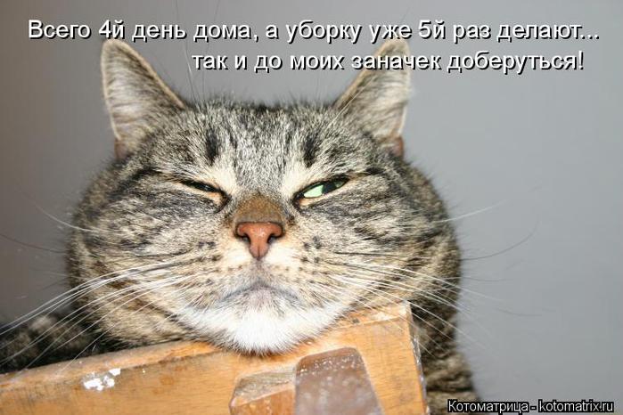 kotomatritsa_1 (700x466, 267Kb)