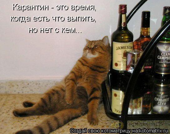 kotomatritsa_W (545x431, 181Kb)