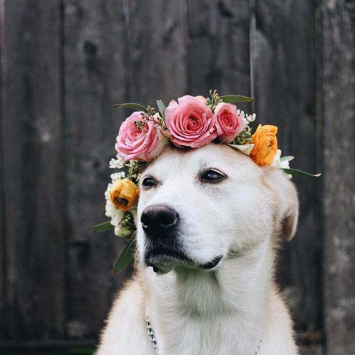 c3bf40cfd23dc29a9000d0fcc40b5d6c--flower-crowns-flower-girls (700x700, 311Kb)