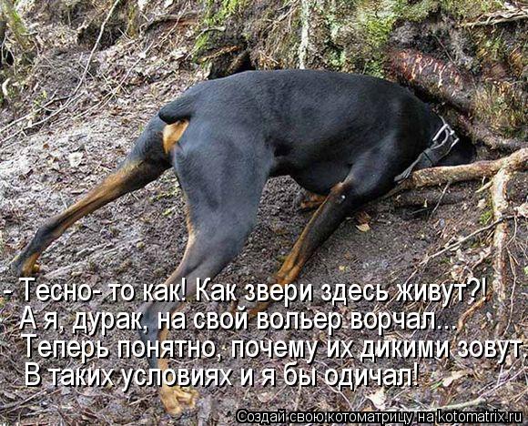 kotomatritsa_O (580x468, 314Kb)
