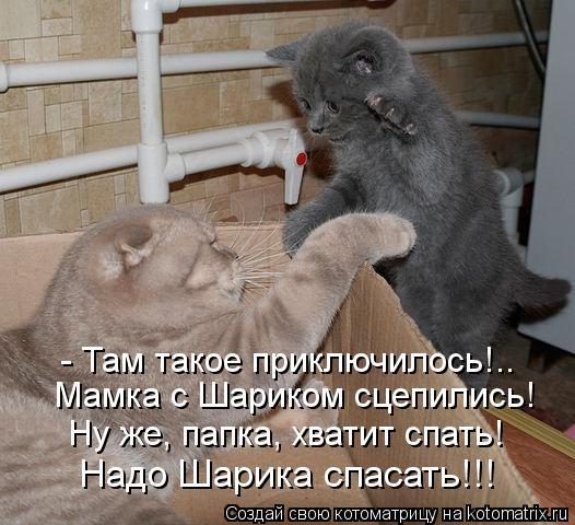 kotomatritsa_qP (526x480, 190Kb)