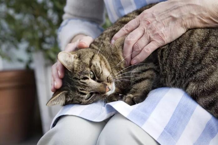 gatto-anziano-gira-su-se-stesso-che-significa--768x512 (700x466, 265Kb)