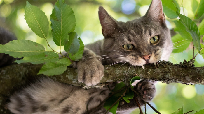 Wildcat-tree-green-leaves_1366x768 (700x393, 291Kb)