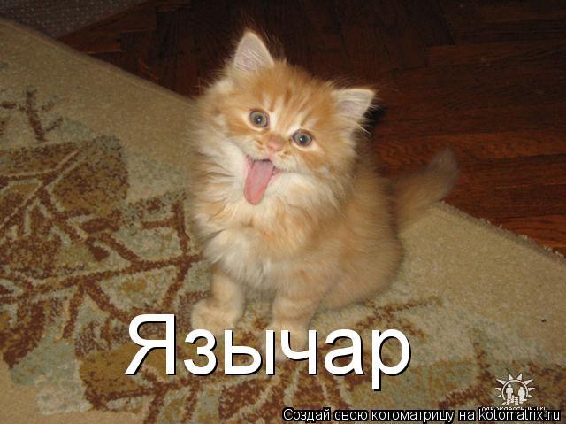 kotomatritsa_SJ (640x479, 204Kb)