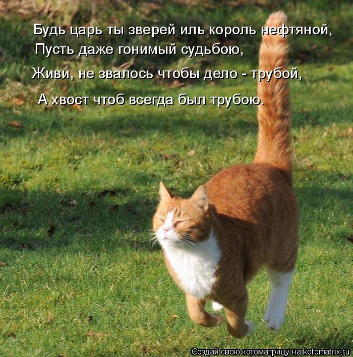 kotomatritsa_T (691x700, 569Kb)