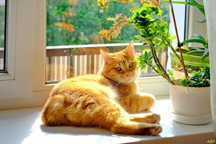 Солнечный кот (Копировать) (700x466, 385Kb)