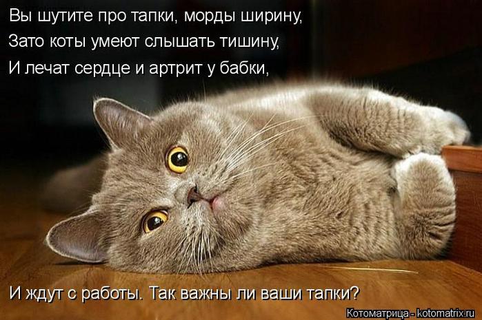 kotomatritsa_1 (1) (700x465, 300Kb)