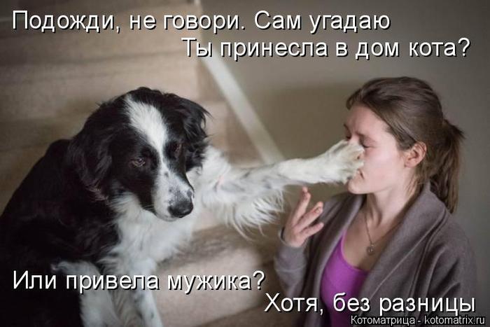 kotomatritsa_a (700x467, 236Kb)