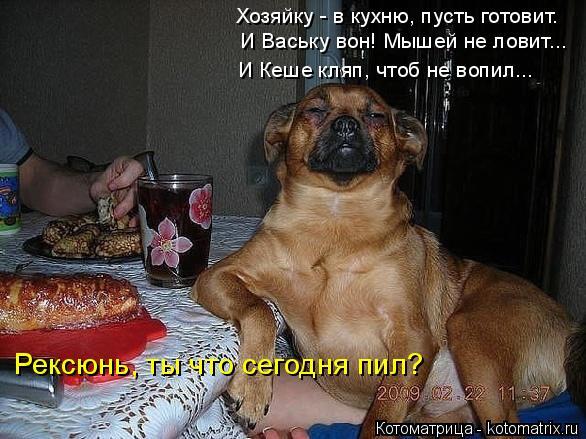 kotomatritsa_J (586x439, 203Kb)